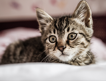 Kitten on bed looking up
